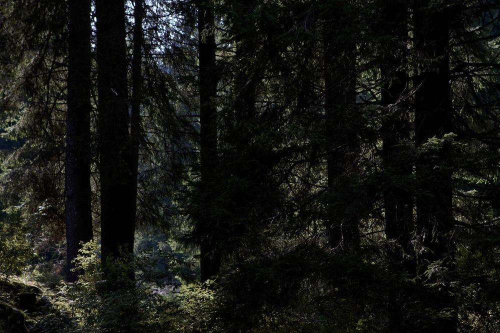 il bosco misterioso e diffidente